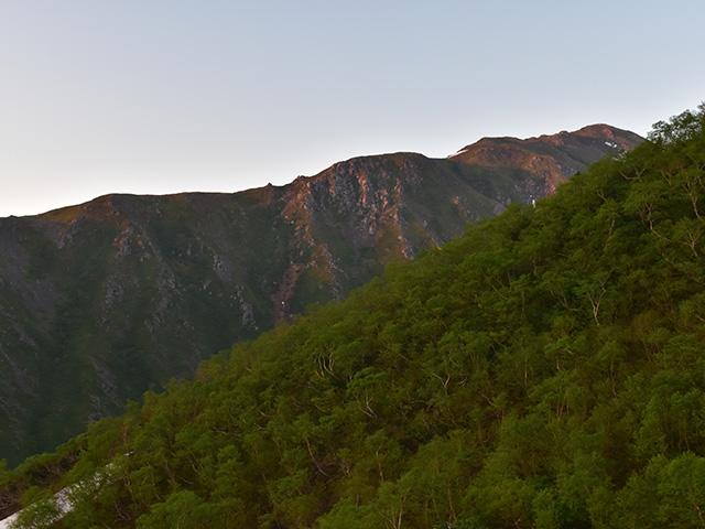 朝焼けの赤石岳とダケカンバ林